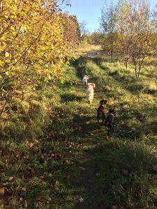 Waggy Tails Dog Walking group walk in Bridge of Earn