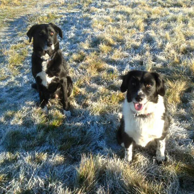 Dog Walking Services in Perthshire
